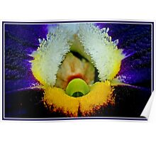 Pansy Power Poster