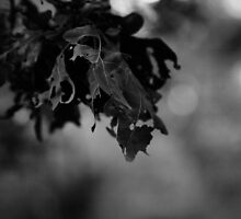 Fading Oak Leaves by iainf2010