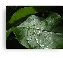 greenery Canvas Print
