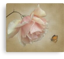 Pale rose Canvas Print