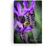 Honey so sweet Canvas Print