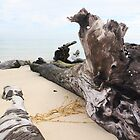 Drift-Wood - on Moreton Island by Bami