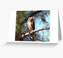 Fledgling Great Horned Owl  Greeting Card