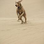 Dune Dog by TingyWende
