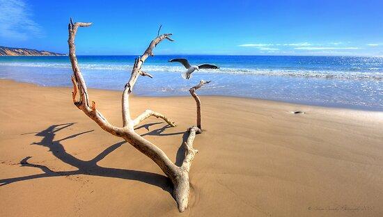 Rainbow Beach Driftwood by Adam Gormley