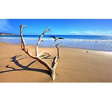 Rainbow Beach Driftwood Photographic Print