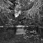 Pathway by Chickapeek