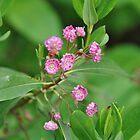 Cute little pink flowers by Chickapeek