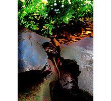 elves Photographic Print