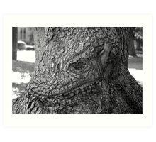 Face of oak Art Print