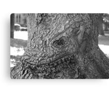 Face of oak Metal Print