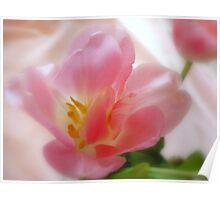 Pink Satin Poster