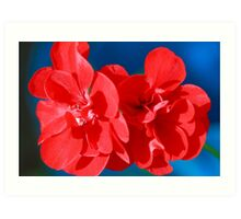 Red garden flowers Art Print