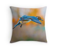 Pintail Duck in flight Throw Pillow