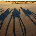 camel shadows in Broome by leigh miller