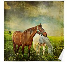 If Horses Could Dream... Poster