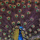A Day at the Zoo - Shakin' The Tail Feathers ( 1 ) by cullodenmist