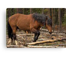 Watchful Stallion Canvas Print