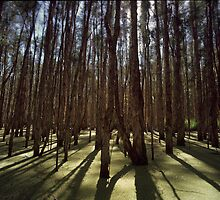 Tea tree swamp by Adam  Smith