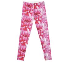 A PINKY CHRYSANTHEMUM FLOWER Leggings