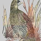 The Quail by Jane Holloway