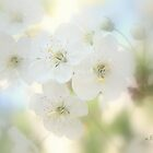 Cherry flowers by aMOONy