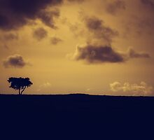 The loneliness of a moorland tree by Chris Fletcher