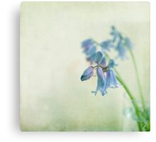 Grunge Bluebell Canvas Print