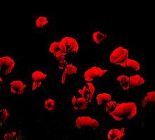 Poppies on the dark side by Jean-Luc Rollier
