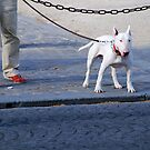 Dog on the street # 5 by Jean-Luc Rollier