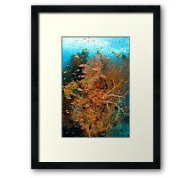 Seafan Community II Framed Print