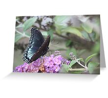 Red Spotted Purple II Greeting Card