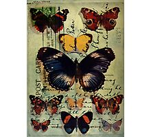 Postcard Butterflies Photographic Print
