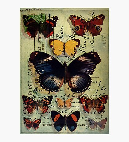 Postcard Butterflies Photographic Print