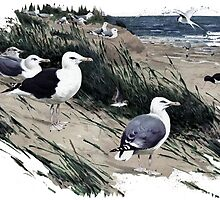 Painting of herring gulls and a Great Black-backed Gull by marmur