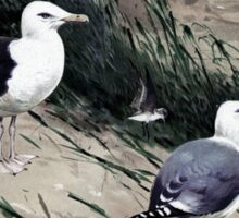 Painting of herring gulls and a Great Black-backed Gull Sticker