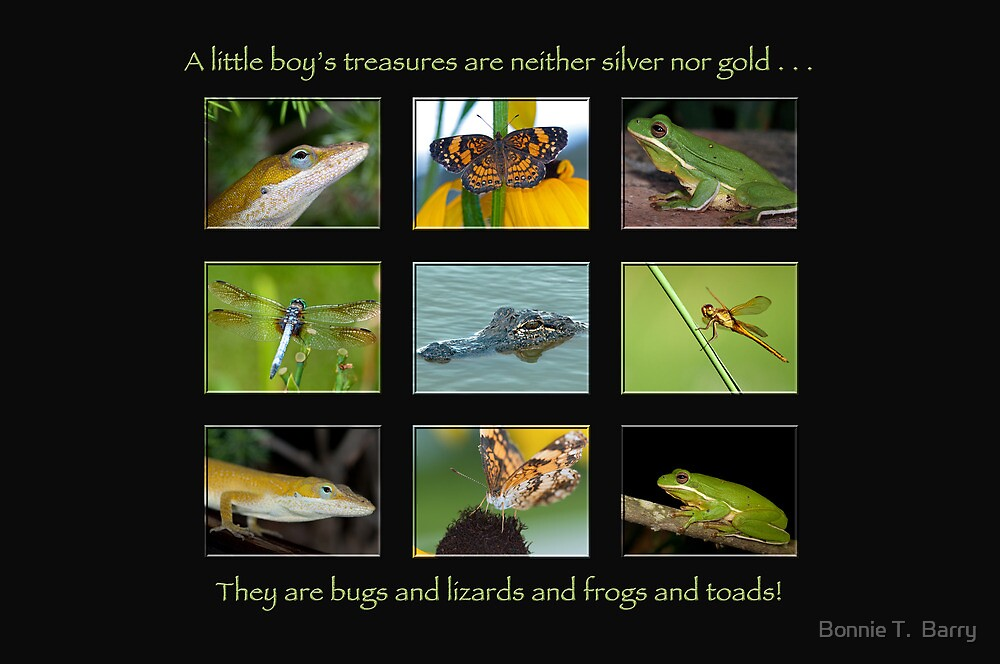 A little boy's treasures . . . by Bonnie T.  Barry