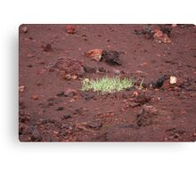 Grass grows anywhere Canvas Print