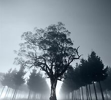 Misty Forest Morning by Ben Goode