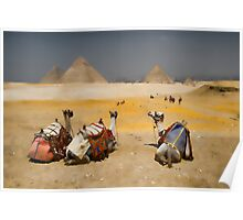 Giza Pyramids with Camels Poster