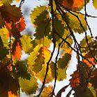 Autumn Leaves in Melbourne by Ashlee Betteridge