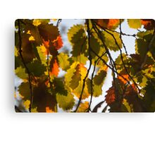 Autumn Leaves in Melbourne Canvas Print