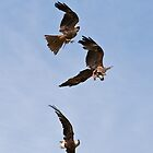 Red Kites - Cotswold Falconry Centre by Sue Earnshaw