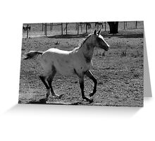 Appaloosa Colt - Black and White Greeting Card