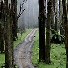 Bicentennial National Trail - Healesville end (Victoria) by Vikki Shedden Photography