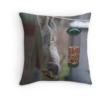 Squirrel 1 - Just hanging around! Throw Pillow