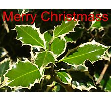 Christmass Holly Photographic Print