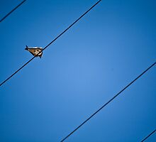 bird on a wire by joberg