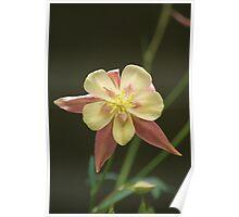 Faery Flower! Poster