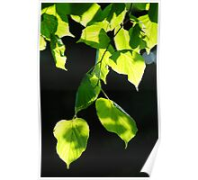 Luminescent leaves Poster